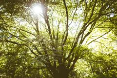 Light shining through tree branches in a forest Stock Photos