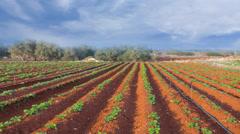 Potato field time lapse scene Stock Footage