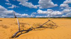 Dry branch among a hot sandy desert Stock Footage