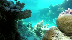 The world under water. - stock footage