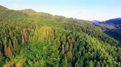 Aerial view of Carpathians mountains - stock footage
