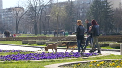 People friends walking in a park with big dogs on leashes in Sofia Bulgaria Stock Footage