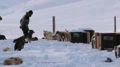 People get dogs ready for a sled run in Longyearbyen, Norway. Stock Footage