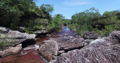 Reveal of Cano Cristales Arkistovideo