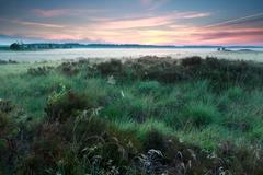 Misty summer sunrise on marsh Stock Photos