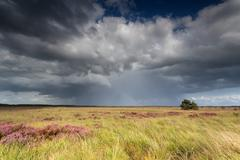 storm clouds over marsh with flowering heather - stock photo