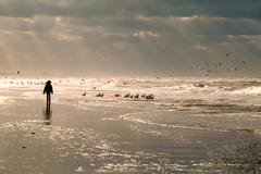 Girl silhouette on North sea beach Stock Photos
