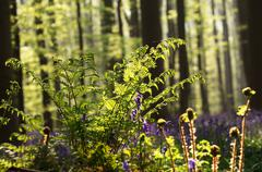 fern in spring forest sunlight - stock photo