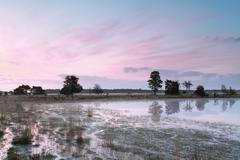 Beautiful pink sunrise on swamp Stock Photos