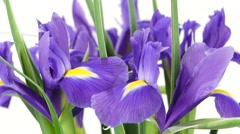 Iris flowers on white, rotation, close up Stock Footage