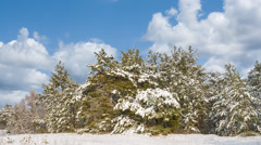 Beautiful winter snowbound landscape Stock Footage