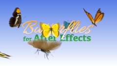 Butterflies - stock after effects