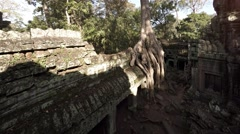 Enormous Tree Roots Sprouting from Ancient Cambodian Temple Ruin Stock Footage