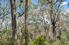 Forest in Victoria, Australia - stock photo