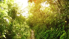 Hiking along a Tropical Nature Trail on a Sunny Morning. Video UltraHD Stock Footage