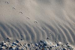Gull Footprint on Helgoland - stock photo