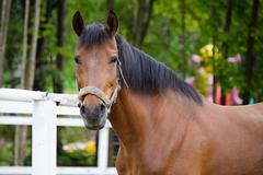 The head of a horse. - stock photo