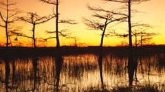 Sunrise in a cypress swamp in Florida - stock footage