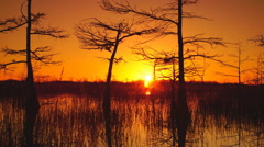 Sunrise Time lapse in a Florida cypress swamp Stock Footage