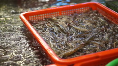 Jumping live seafood shrimp in Chinese market. Hand taking prawn for sell Arkistovideo