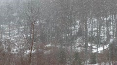 Heavy snow fall in a remote forest in Scotland Stock Footage