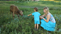 Mother with son feeding a cow Stock Footage