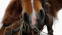 Beautiful shot of brown horse. She chews hay in slow motion. - stock footage