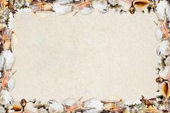 Tropical shells on a sandy beach - stock photo