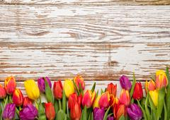 Fresh tulips arranged on old wooden background Stock Photos