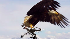 Drone Carried Away by Bald Eagle UAV Hunter slowmo Stock Footage