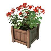 Red Geranium Planter on White - stock illustration