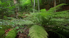 Slider shot  through Ferns tracking, dolly shot in the green forest Stock Footage