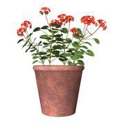 Red Geranium Pot on White - stock illustration