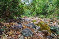 Stock Photo of Stream in the tropical jungles