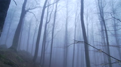 Mystical forest ,with trees in winter surrounded by fog-paniramic view Stock Footage