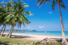 Coconut palm on a tropical beach - stock photo