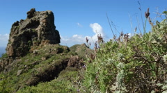 Characteristic vegetation on the hills of the north of Tenerife Stock Footage