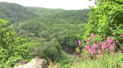 River valley with the bright flowers in the front - stock footage
