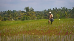 Balinese farm hand working in rice paddies on a plantation in Bali, Indonesia Stock Footage