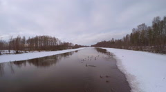 Mallards on the edge of ice, flying, 4K drone footage Stock Footage