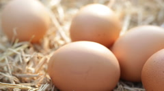 Dolly shot of hens eggs in a nest - stock footage