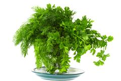 seasoning green dill and parsley on a plate - stock photo