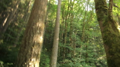 Forest north of Portland Stock Footage