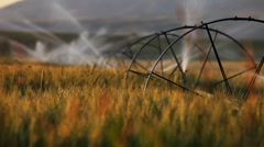 Wheat fields in Bozeman Montana Stock Footage