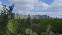 Cacti Sliding Shot - stock footage