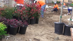 NEW HOME LANDSCAPE WORKERS, landscape crew hard at work - stock footage
