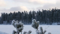 Winter frost on spruce tree  close-up .Shallow depth-of-field Stock Footage