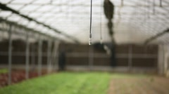 A tilt down footage of hothouse focusing on watering system - stock footage