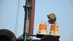 Monkeys playing on siren light of railway train Stock Footage