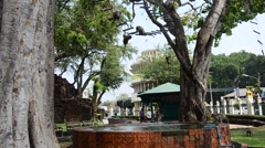 Monkeys playing at Phra Kal Shrine Stock Footage